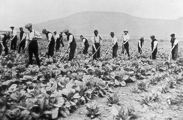 old-farming-lettuce